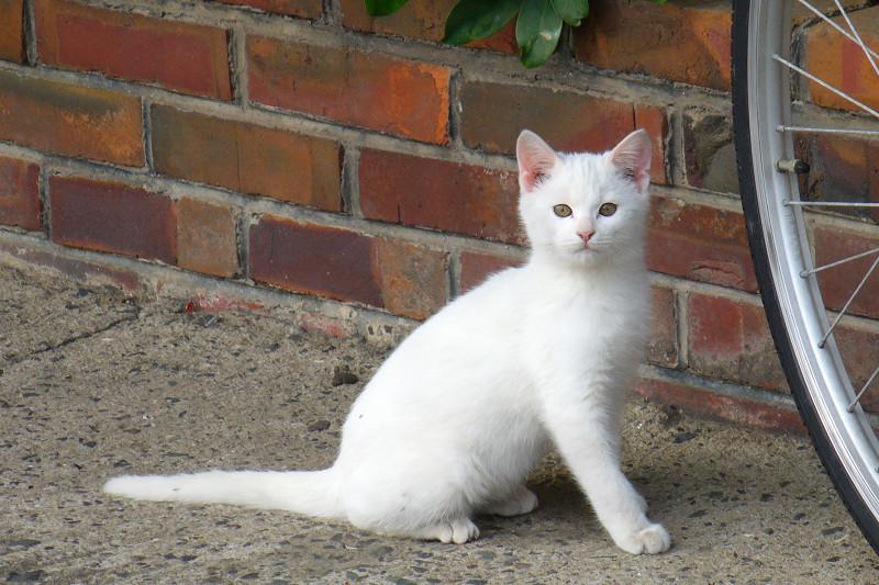 公園の白猫3