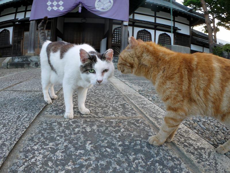 境内で出会った猫たち1