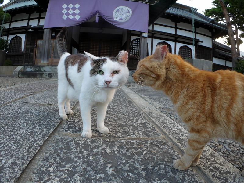 境内で出会った猫たち2