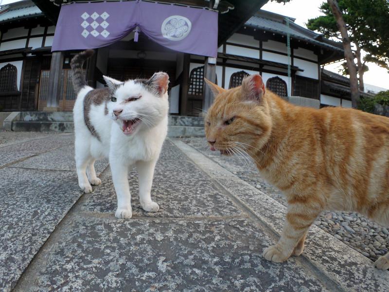 境内で出会った猫たち3