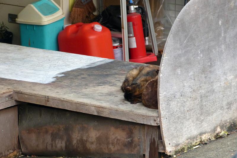 荷台の上で寝てるサビ柄猫1
