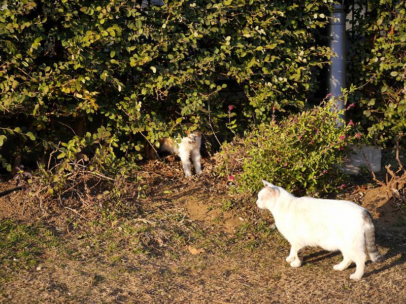 茂みの前の猫たち1