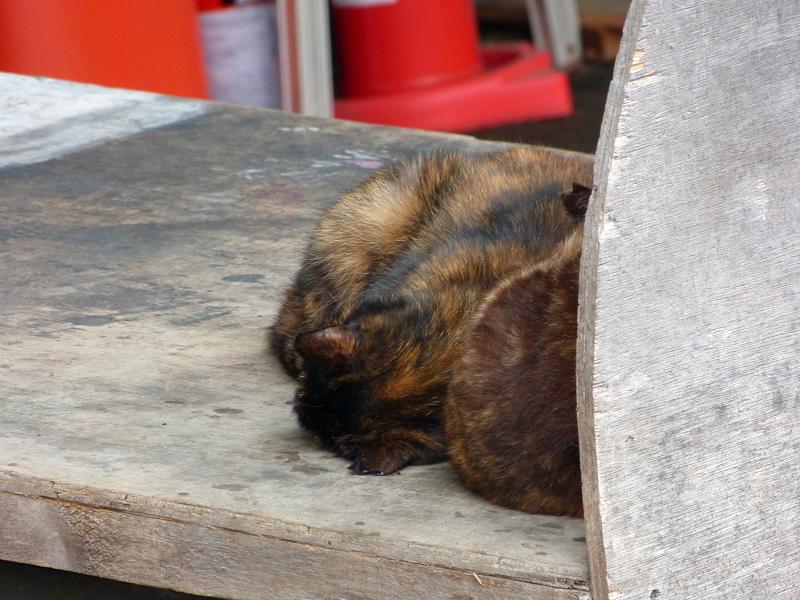 荷台の上で寝てるサビ柄猫2