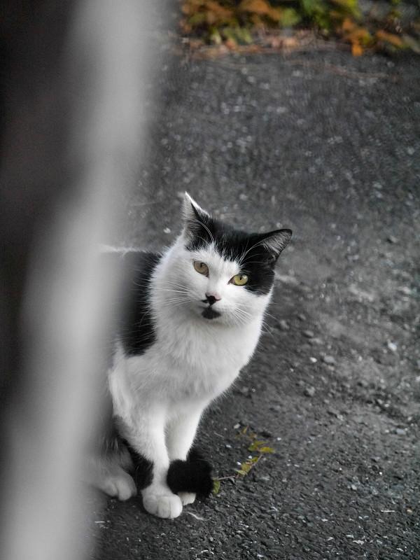 見つめ合った黒白猫2