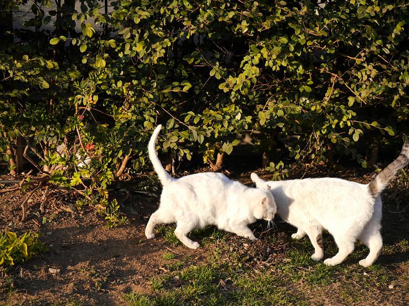 茂みの前の猫たち2