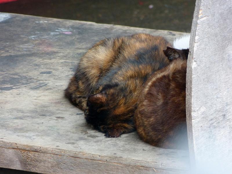 荷台の上で寝てるサビ柄猫3