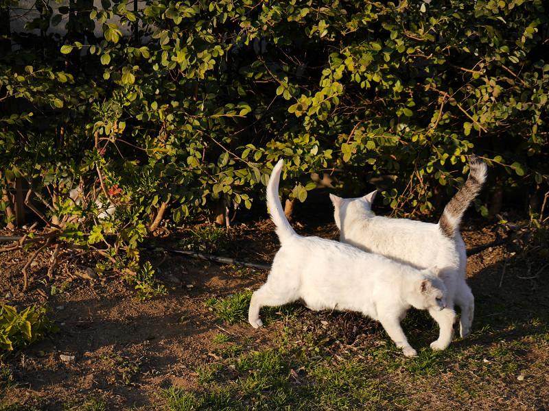 茂みの前の猫たち3