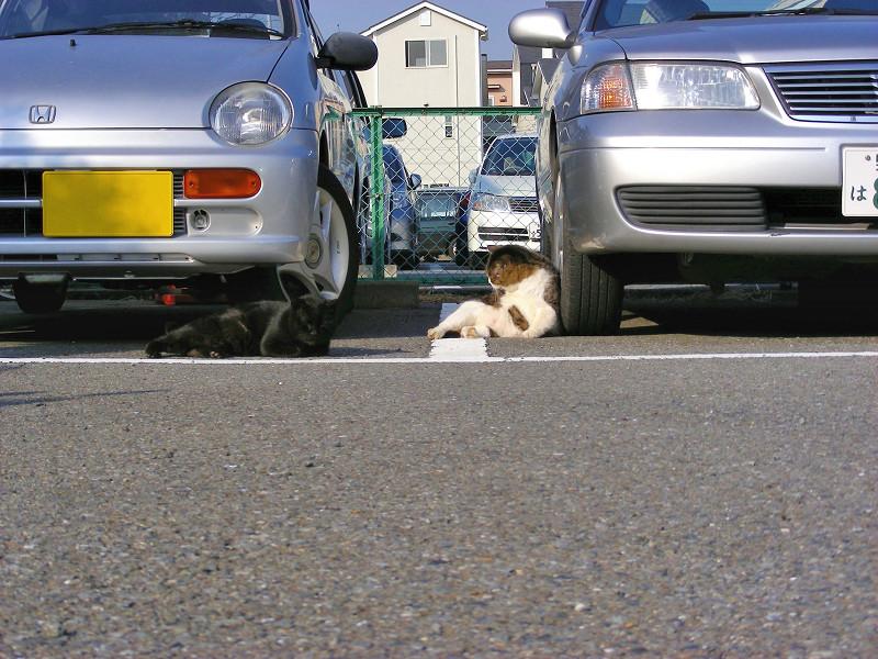 駐車場の黒猫とキジ白猫1