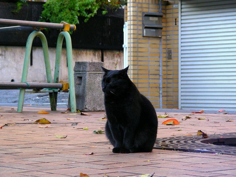 公園タイルの黒猫1