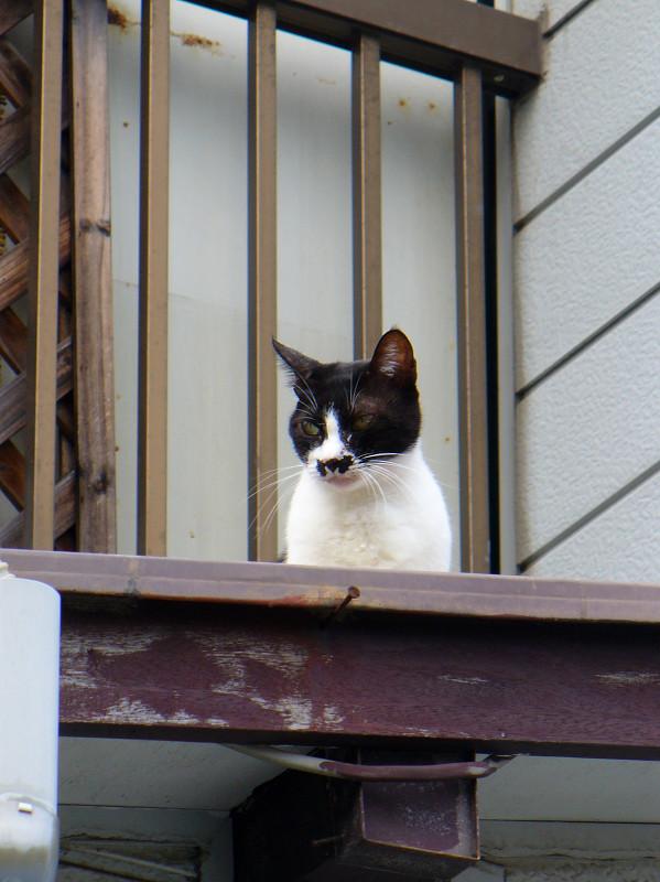 屋根の上のチョビ髭黒白猫1