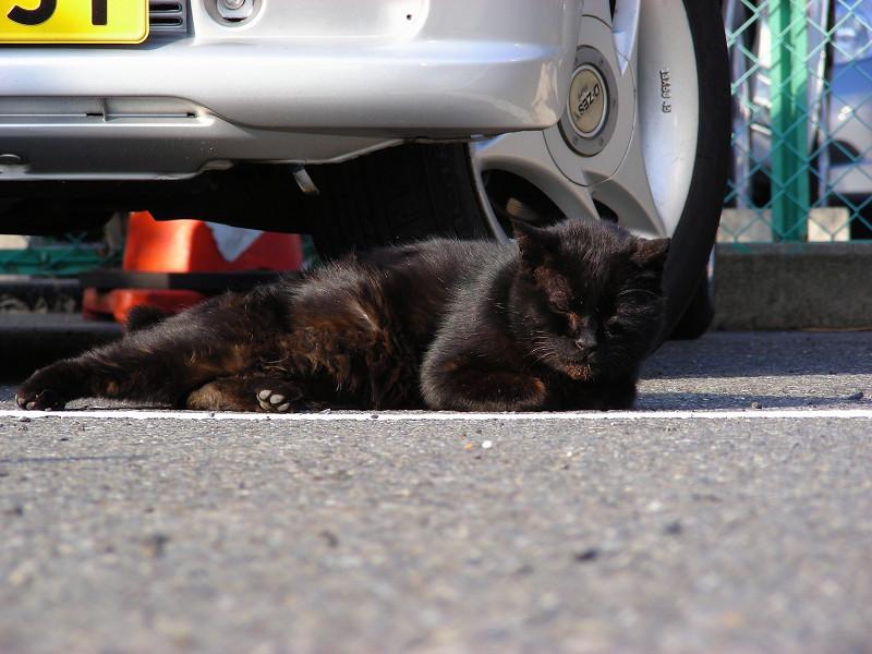 駐車場の黒猫とキジ白猫2