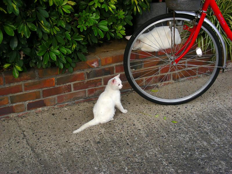 赤い自転車と白い猫2