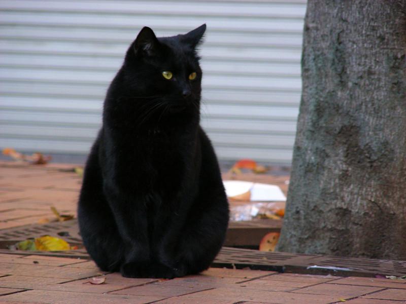公園タイルの黒猫2