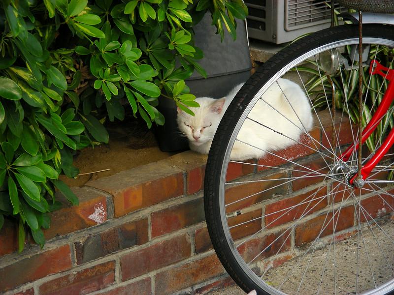赤い自転車と白い猫3