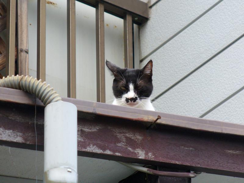 屋根の上のチョビ髭黒白猫3