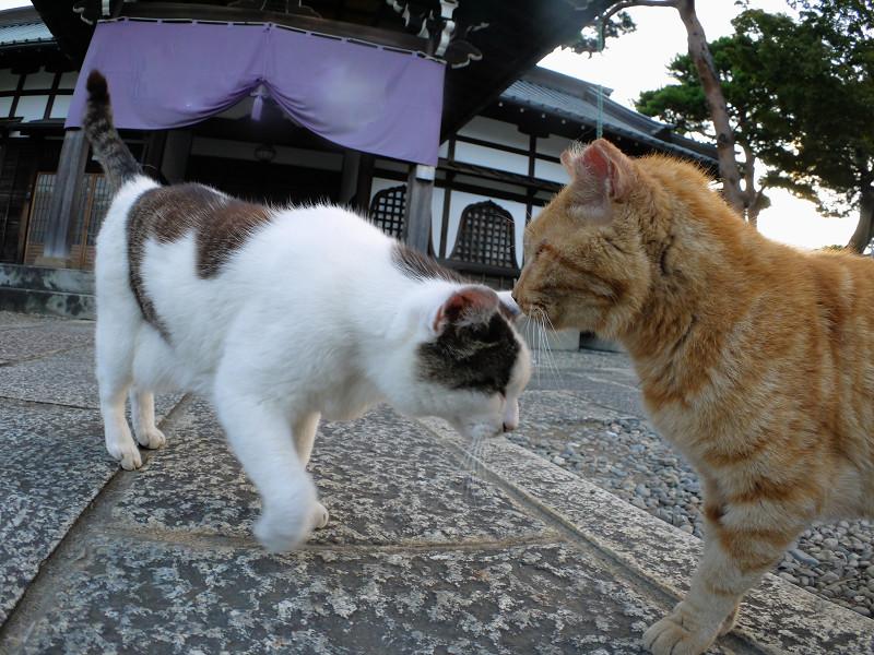 仲良しになっていた猫たち1
