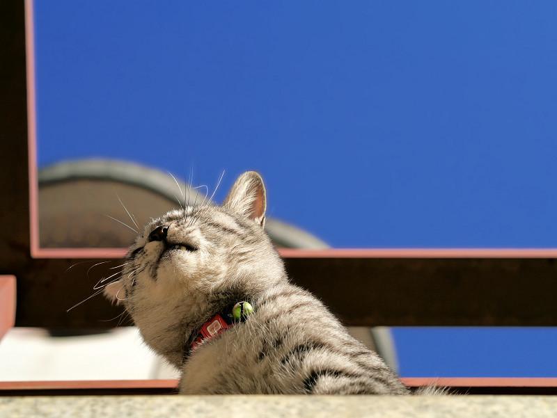 青空と見下ろすサバトラ猫1