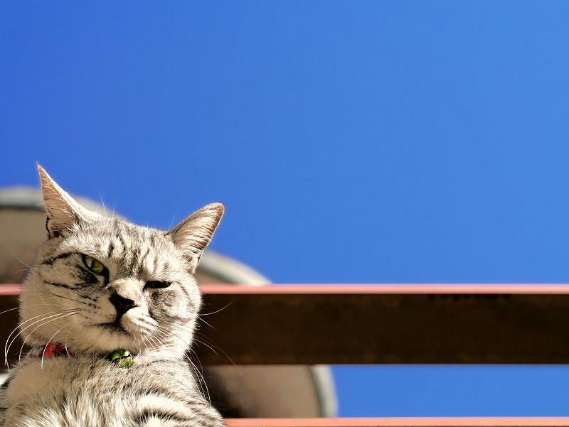 青空と見下ろすサバトラ猫2