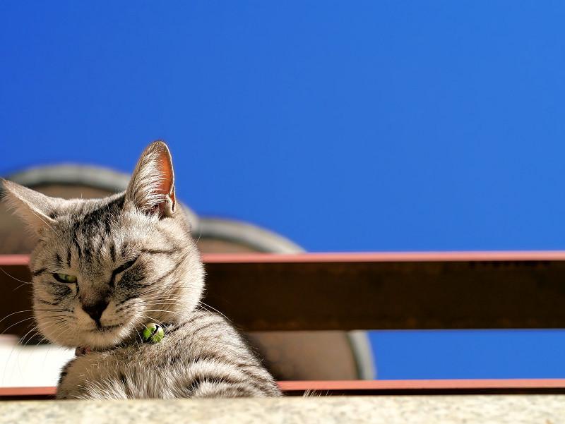 青空と見下ろすサバトラ猫3