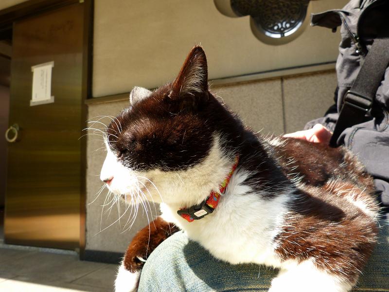 久し振りに膝に乗った黒白猫3