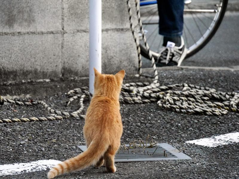支柱と茶トラ猫1