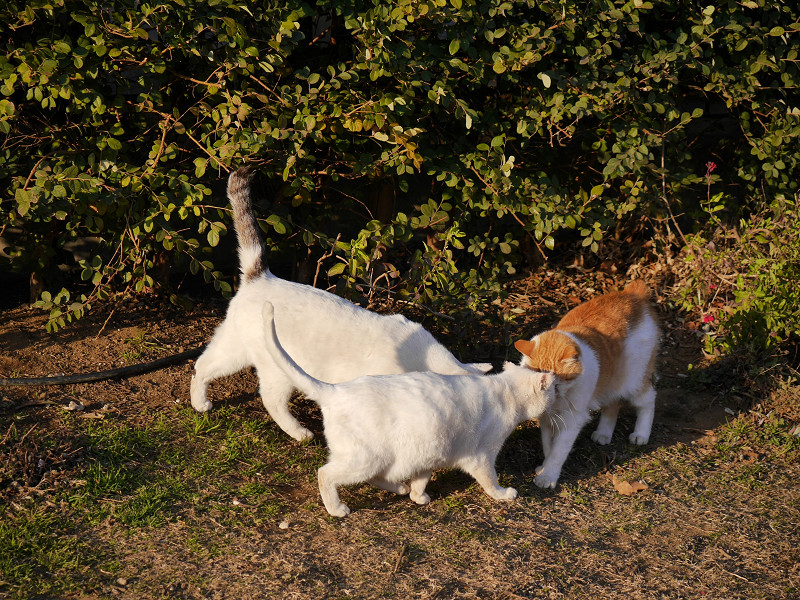3匹の仲良し猫たち1