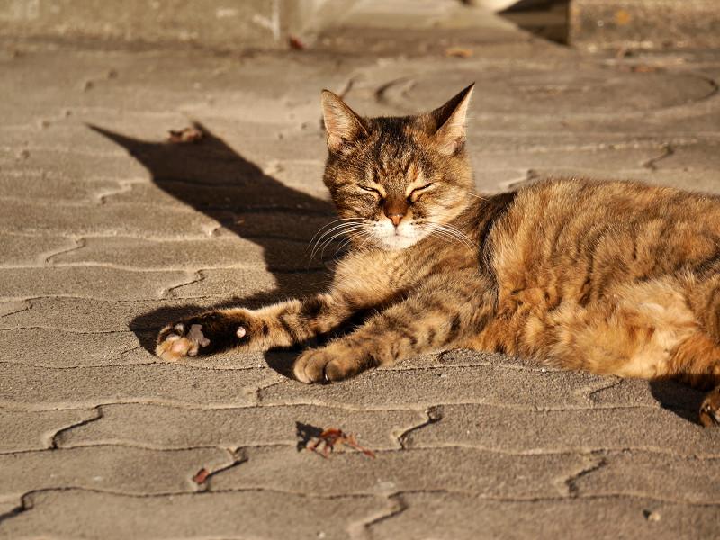 陽射しを浴びて眠くなるサビ猫2