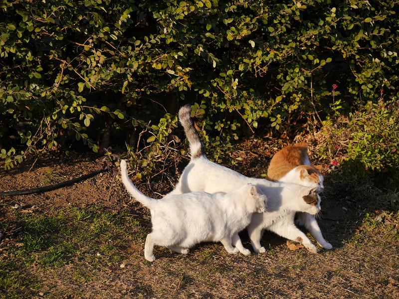 3匹の仲良し猫たち2