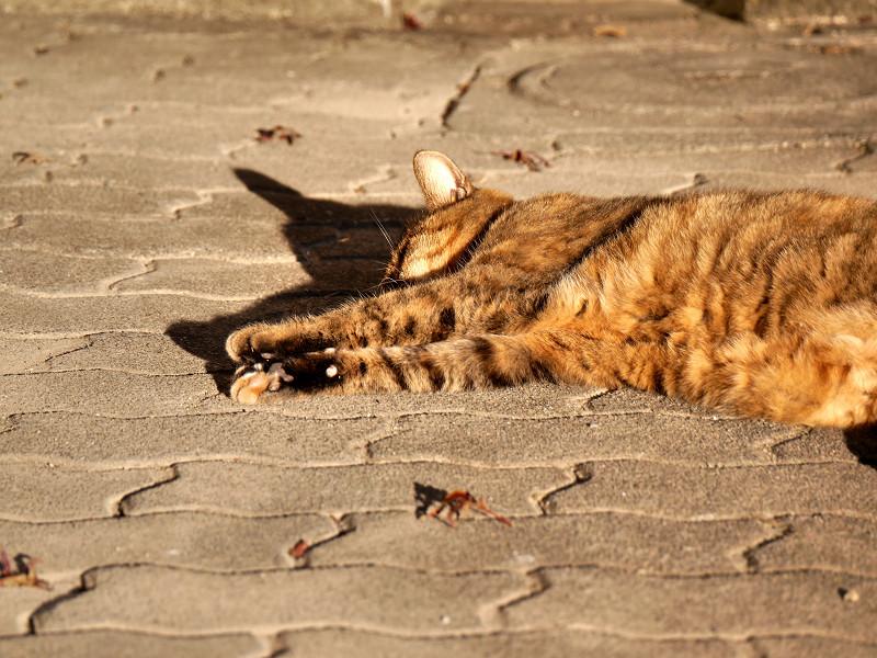 陽射しを浴びて眠くなるサビ猫3