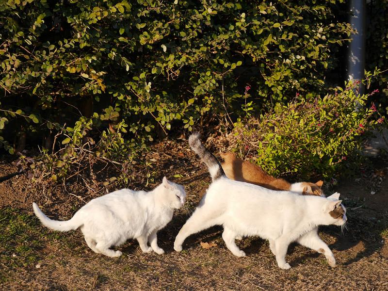 3匹の仲良し猫たち3