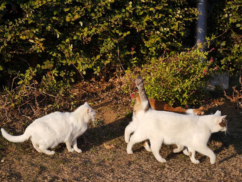 3匹の仲良し猫たち4