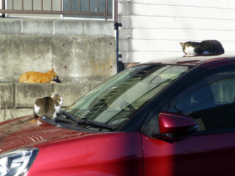 赤い車と猫たち1