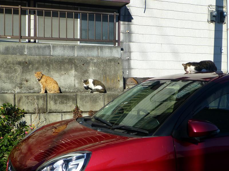 赤い車と猫たち2
