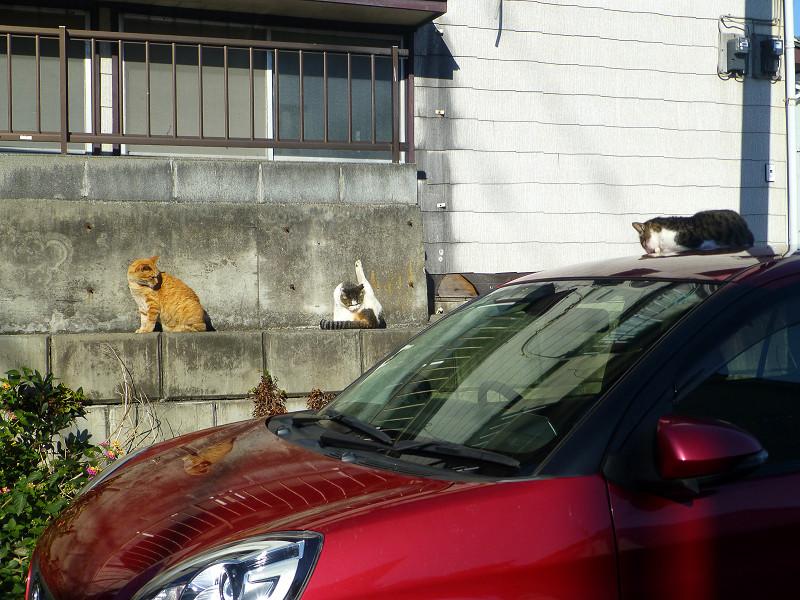 赤い車と猫たち3