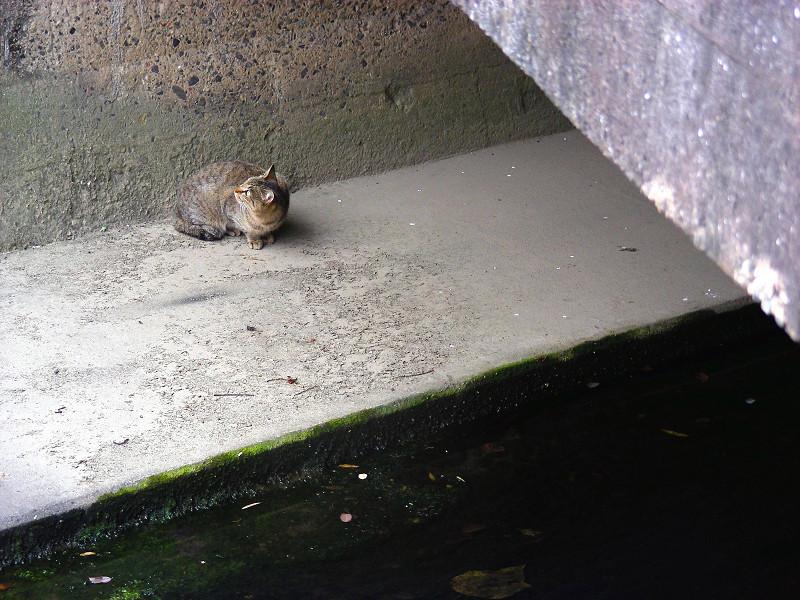 川の横にいるキジトラ猫1