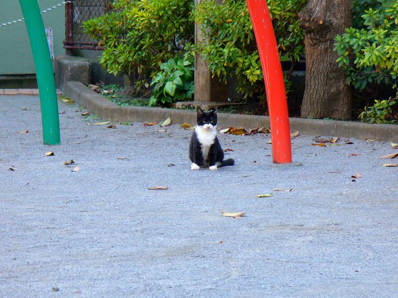 公園土の黒白猫1