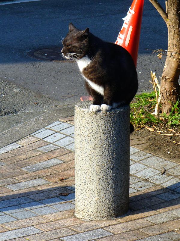 柱に座ってる黒白猫1