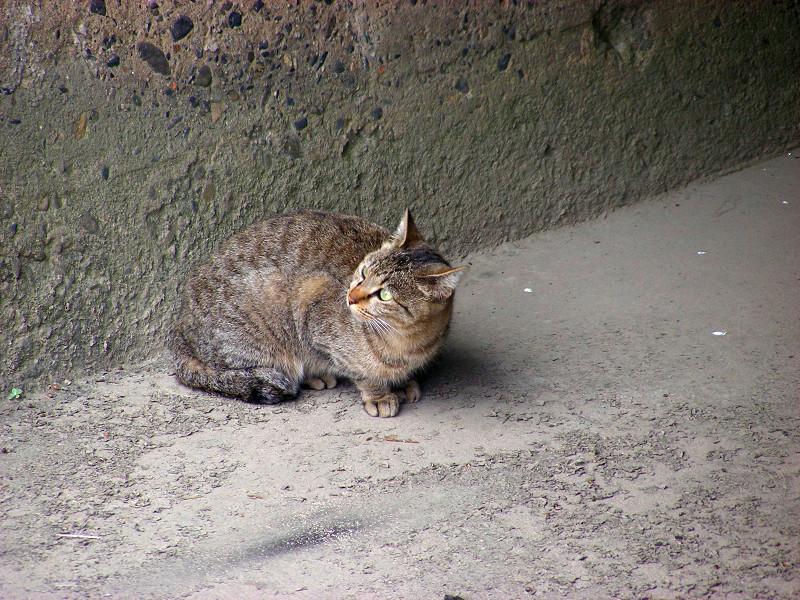 川の横にいるキジトラ猫2