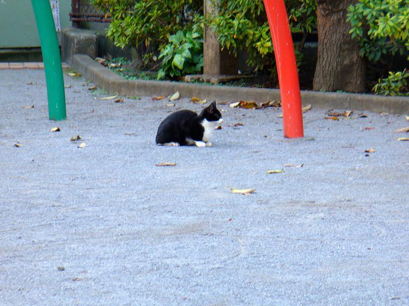 公園土の黒白猫2