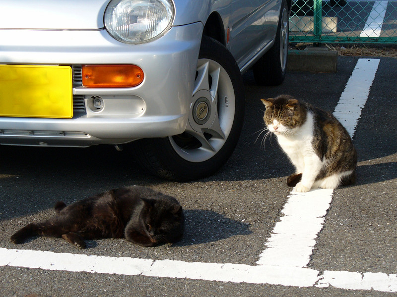 白線上の猫たち2