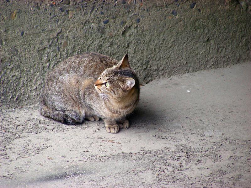 川の横にいるキジトラ猫3