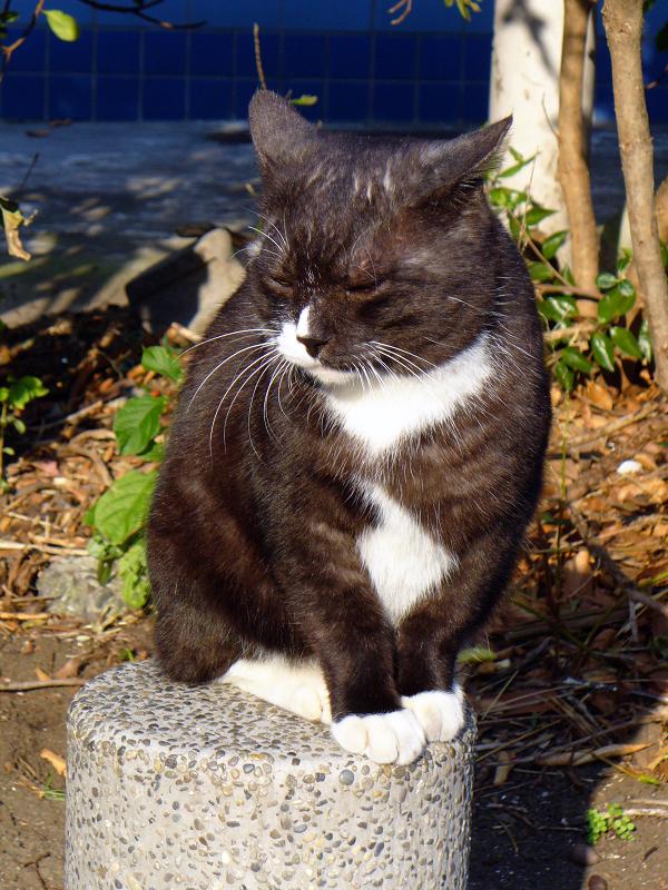 柱に座ってる黒白猫3