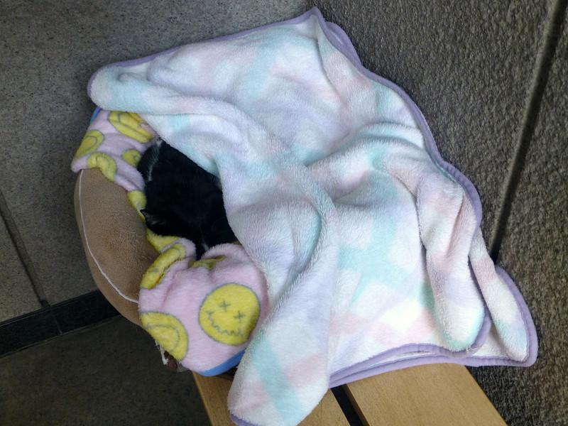毛布に包まってる黒白猫
