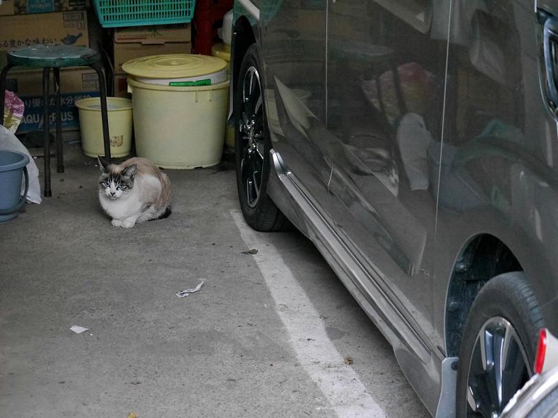ガレージの奥の洋猫風