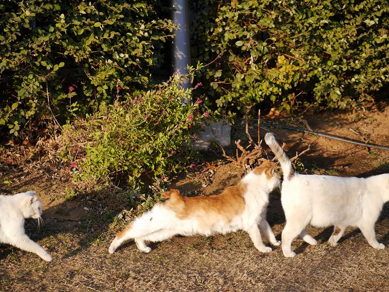 仲良しな猫たち3匹1