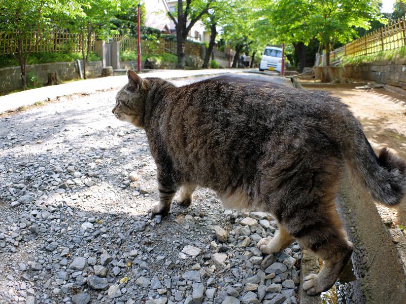 参道を横切るキジトラ猫2