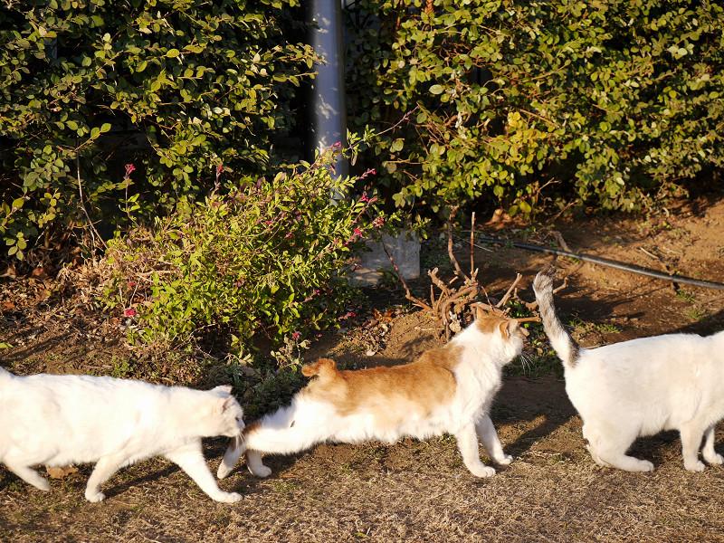 仲良しな猫たち3匹2