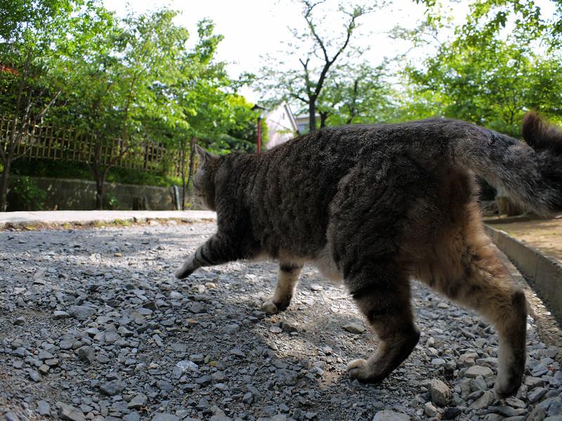 参道を横切るキジトラ猫3