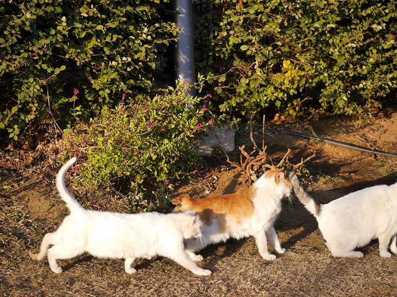 仲良しな猫たち3匹3
