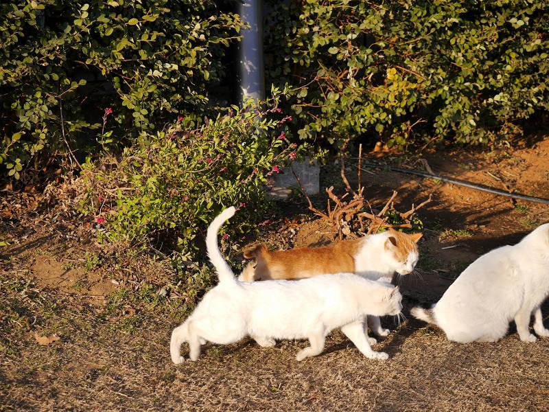 仲良しな猫たち3匹4